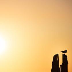 Bird, Scheveningen