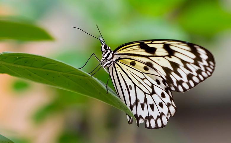 fly away -2-  - onbekende vlinder