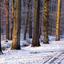 de bomen in het bos 2 1501300626mw