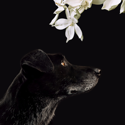 Dog and Orchidee