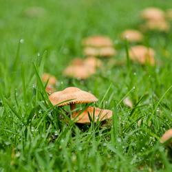 Een paddenstoel uit de heksenkring