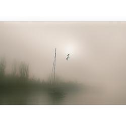 Mist....,,.,
