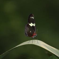 vlinder ging er echt voor zitten