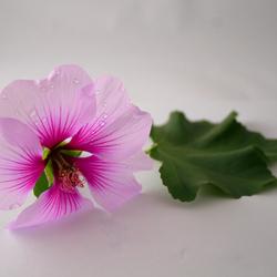 Zelfgemaakte macrostudio  bloem close up