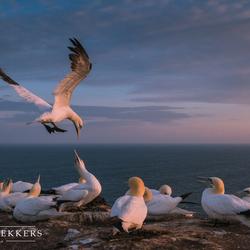 Zonsondergang op Helgoland