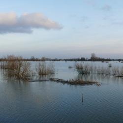 Hoog water uiterwaarden Rijn vanaf Grebbedijk Wageningen, Di. 30-1-2018.