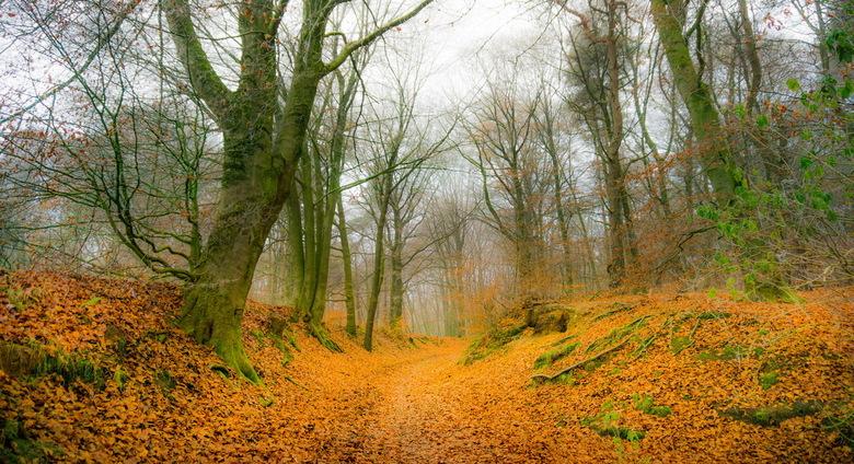 Mist in de achterhoek - Foto is een hdr van 5 opnames. Locatie: Kilderse bos.