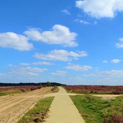 Heide Nederland