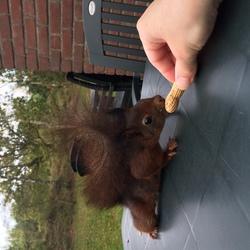 dutch wildlife :)