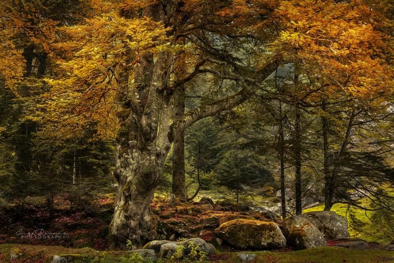 Dragon Forest. - Nog eentje genomen in de Franse Pyreneeen. Het is goed om eens af en toe een foto te bewerken waarin het niet mistig is. Het stimulee