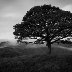 THE BEAUTY OF NATURE IN BLACK AND WHITE IV