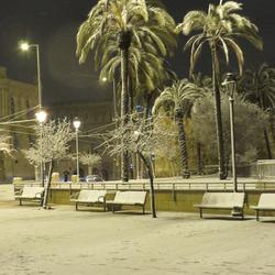 palmen in de sneeuw