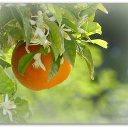 Naranja Ibiza