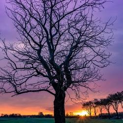 Zonsopkomst bij de boom