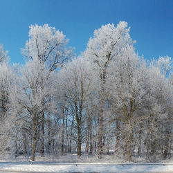winter in holland 3
