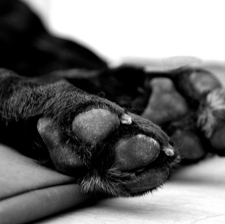 Bono poot - Onze hond Bono: foto genomen met Nikon D700, Nikkor 24 -120 mm