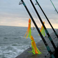 vissen op de noordzee