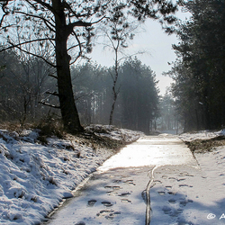 Fietspad bij Kootwijk