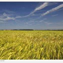 Gouden Graanveld - Norfolk graanschuur van Engeland