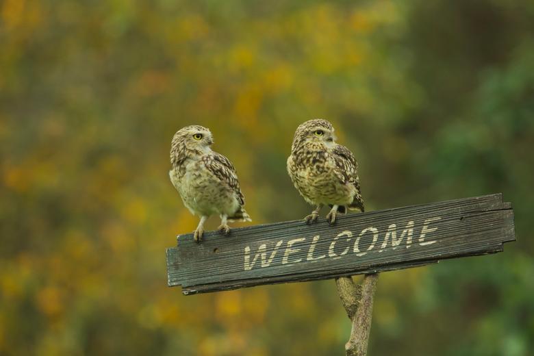Welcome! - Deze twee holenuiltjes geven je het gevoel dat je extra welkom bent  Met de herfstkleuren op de achtergrond vond ik dit een mooi tafereeltj