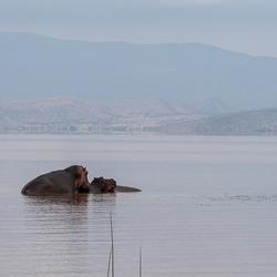 Ethiopie Langano Lake 2