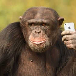 Modern Chimp