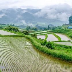 Rijstvelden Japan