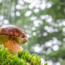 Regen en paddestoelen, herfst.