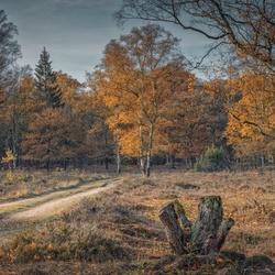 Herfst op de Hoge Veluwe