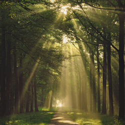 Freckled forest