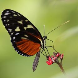 vlinder in blijdorp 2