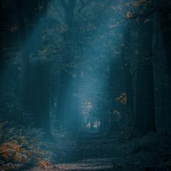 Dark Dutch Woods