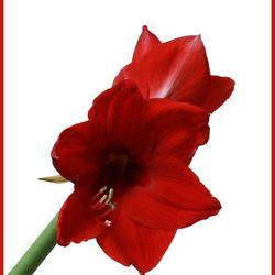 bloem 2