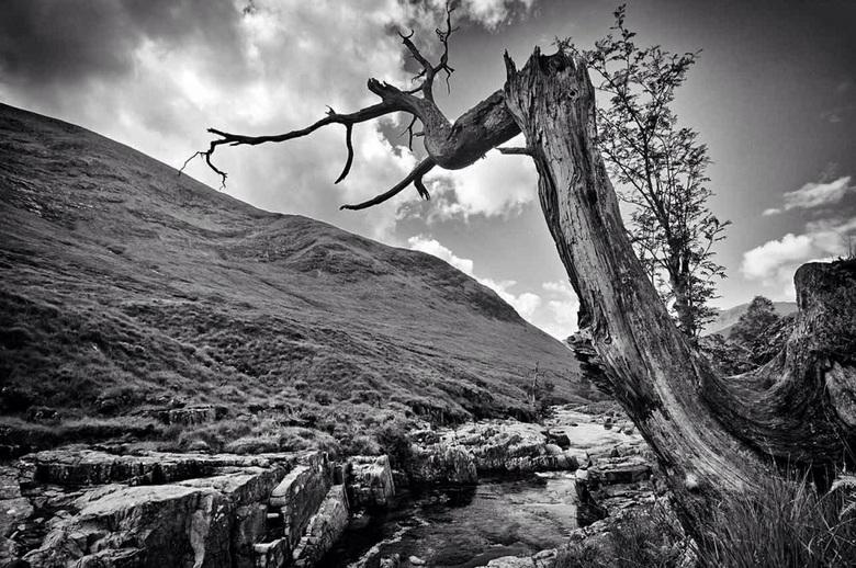 Lone Tree - Schotland| Glen Etive <br /> Lone Tree