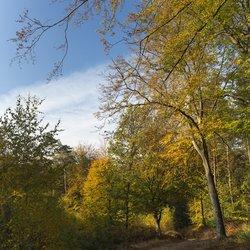 Herfst in vol ornaat