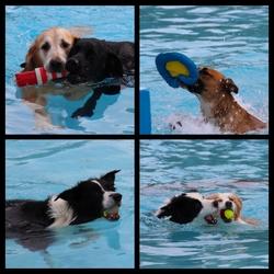 Hondenzwemmen in Mosaqua