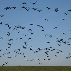 Vliegen naar het Wad