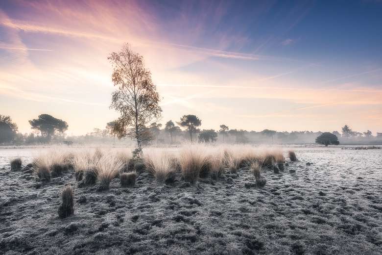 A Touch of Frost - Sprookjesachtige taferelen op de Strijbeekse Heide afgelopen zondag ochtend.