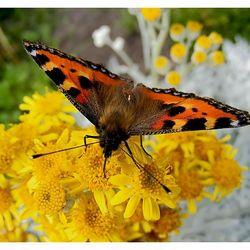 Een vlinder....alweer een aantal weken geleden