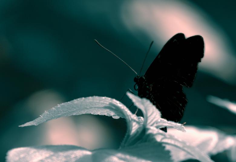 Butterfly silhouette - liberté fotografie  - Butterfly silhouette - liberté fotografie