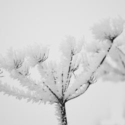 winterwit