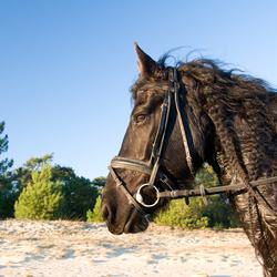 Pracht Paard