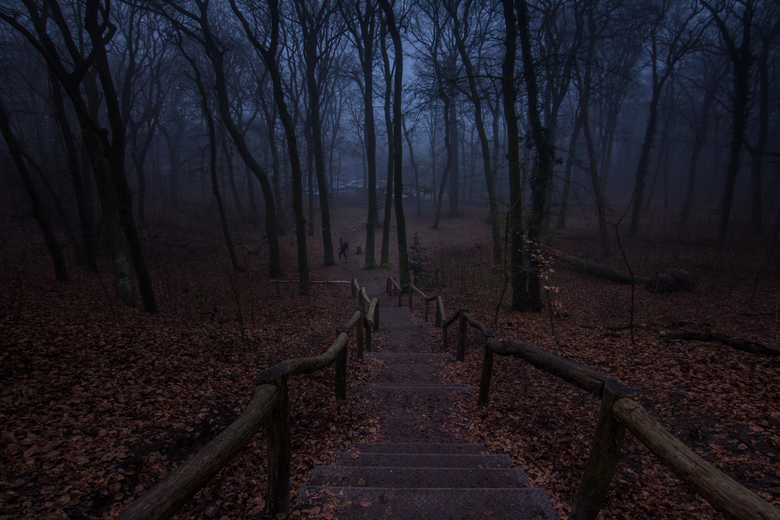 stairs to a magical forest - met de trap een andere wereld in...