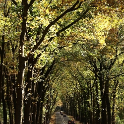 bomenlaan van `Rozendaal naar Velp