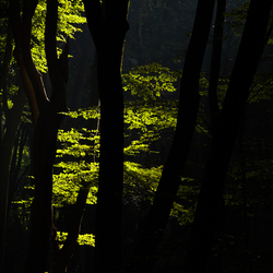 samenspel in het bos
