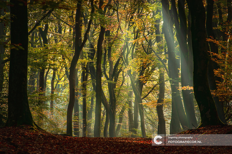 Ochtendje Speulderbos - De dansende bomen in het Sprielder- en Speulderbos zijn natuurlijk superfotogeniek! Dit jaar staat het dan ook zeker op de age