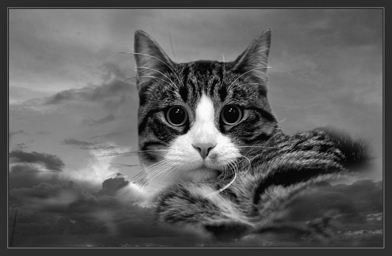 Bewerking: Prins Puma - Ook maar even in grijstinten, vond ik ook wel iets hebben...