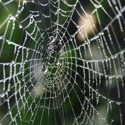 Web van druppels