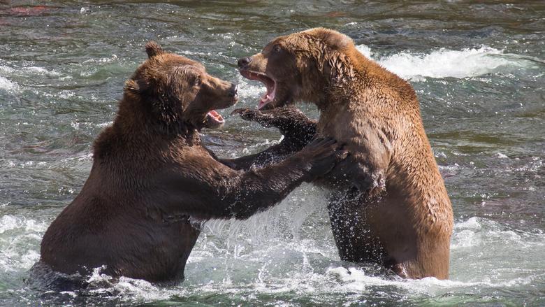 Wegwezen, dit is mijn visplekje!