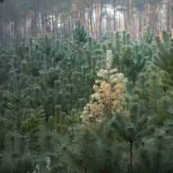 Kerstboom in het bos.